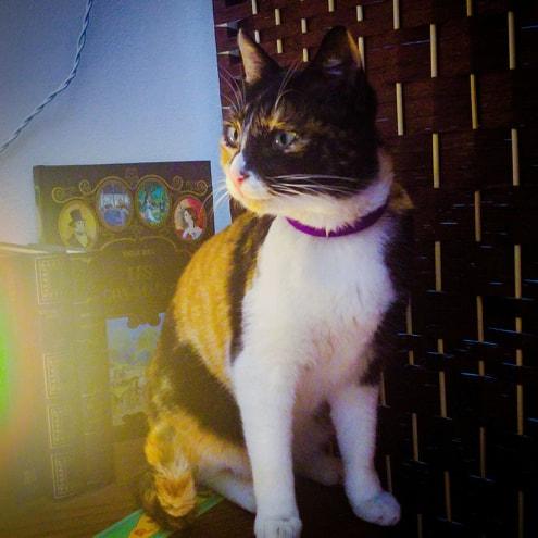 chat, 15 choses à dire à une femme autiste