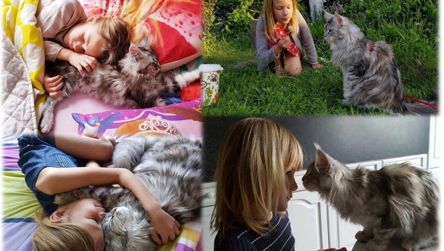 chats, 15 choses à dire à une femme autiste, relation chat autiste